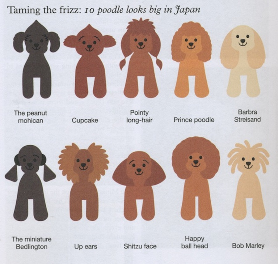 Toy Poodle Hairstyles Hairstyles Image Gallery General Toy Poodle ...