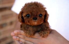 small_dog_cute