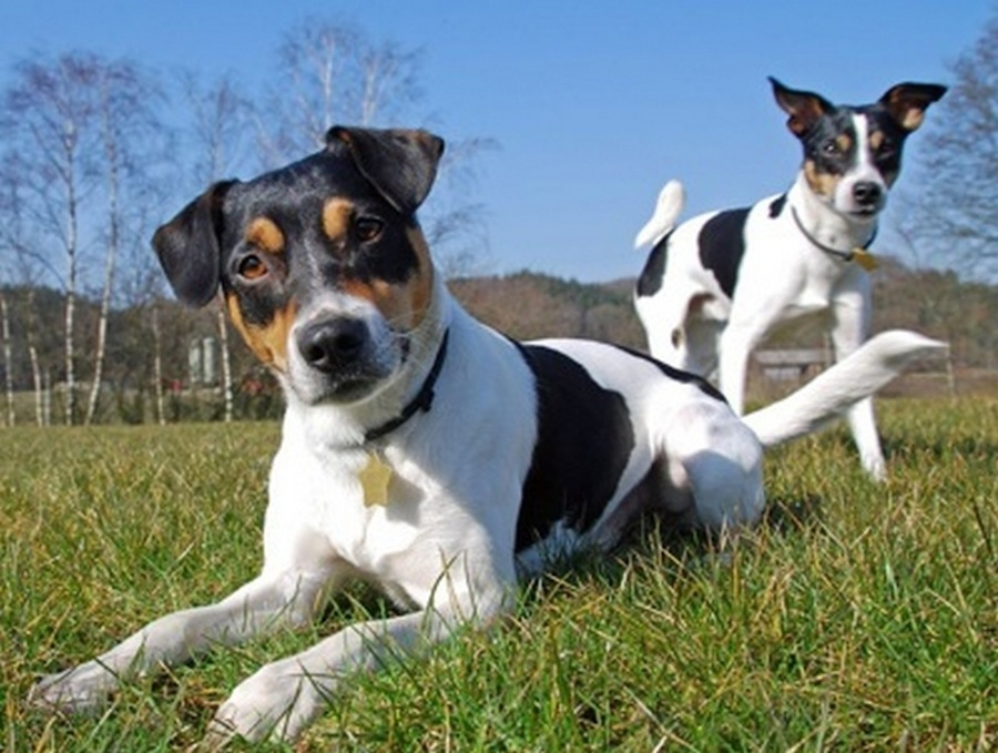 Количество собак в Копенгагене за последние 5 лет выросло на 50%