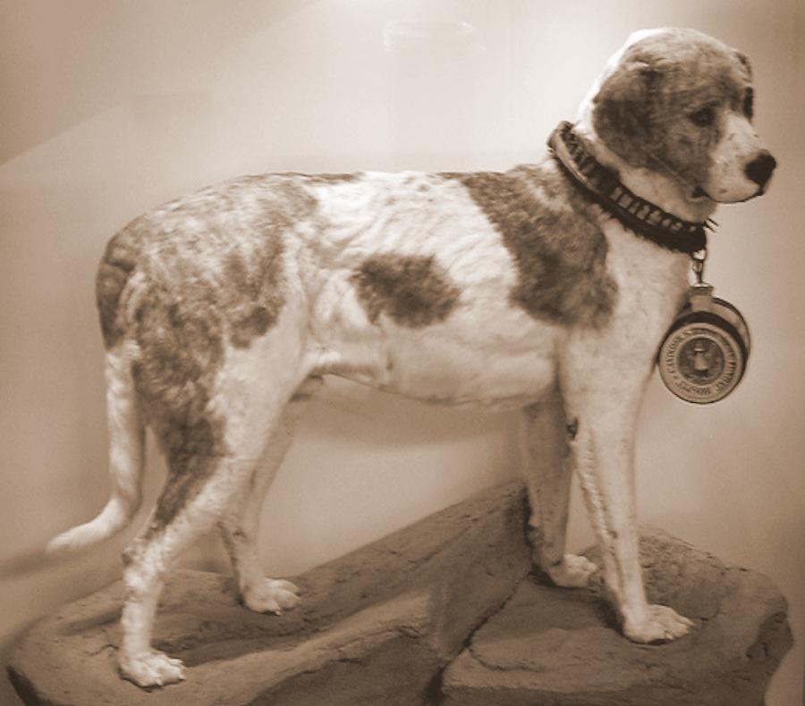 Alpine Spaniel is an extinct dog breed.