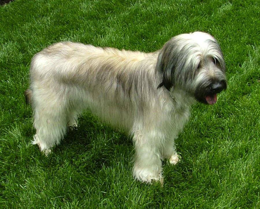 Sheep Dog Breed Name