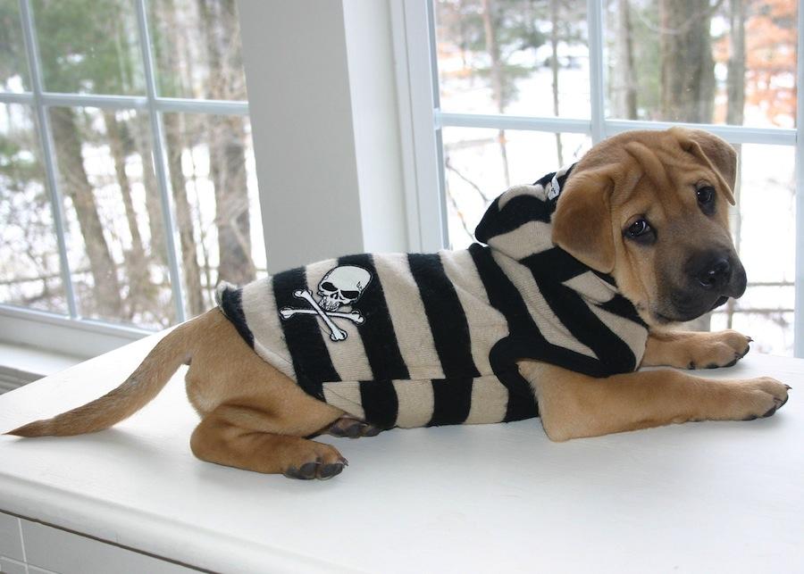 Ba-sher designer dogs