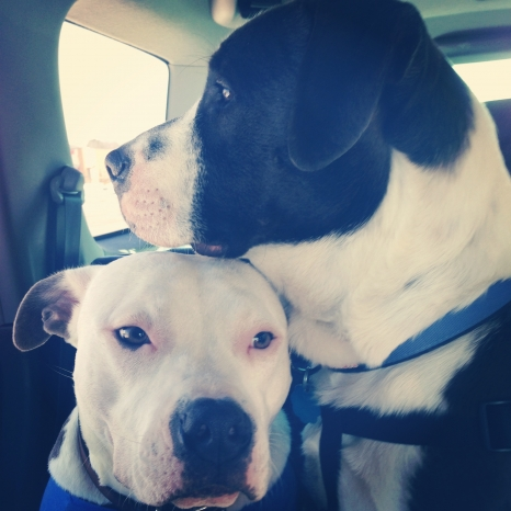 dogs_love_dogs_4