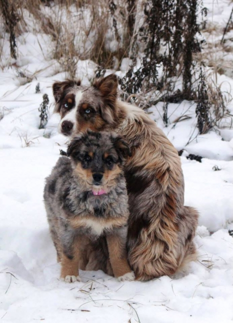 dogs_love_dogs_5