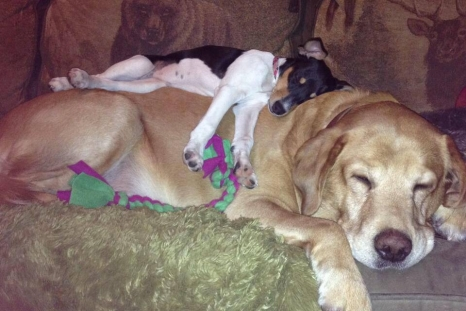 dogs_love_dogs_8